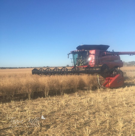 Close harvester canola wm